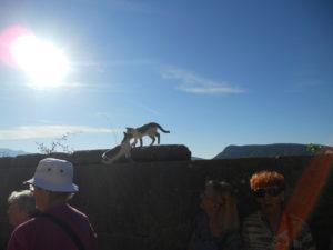 ギリシャの幸せな猫と犬